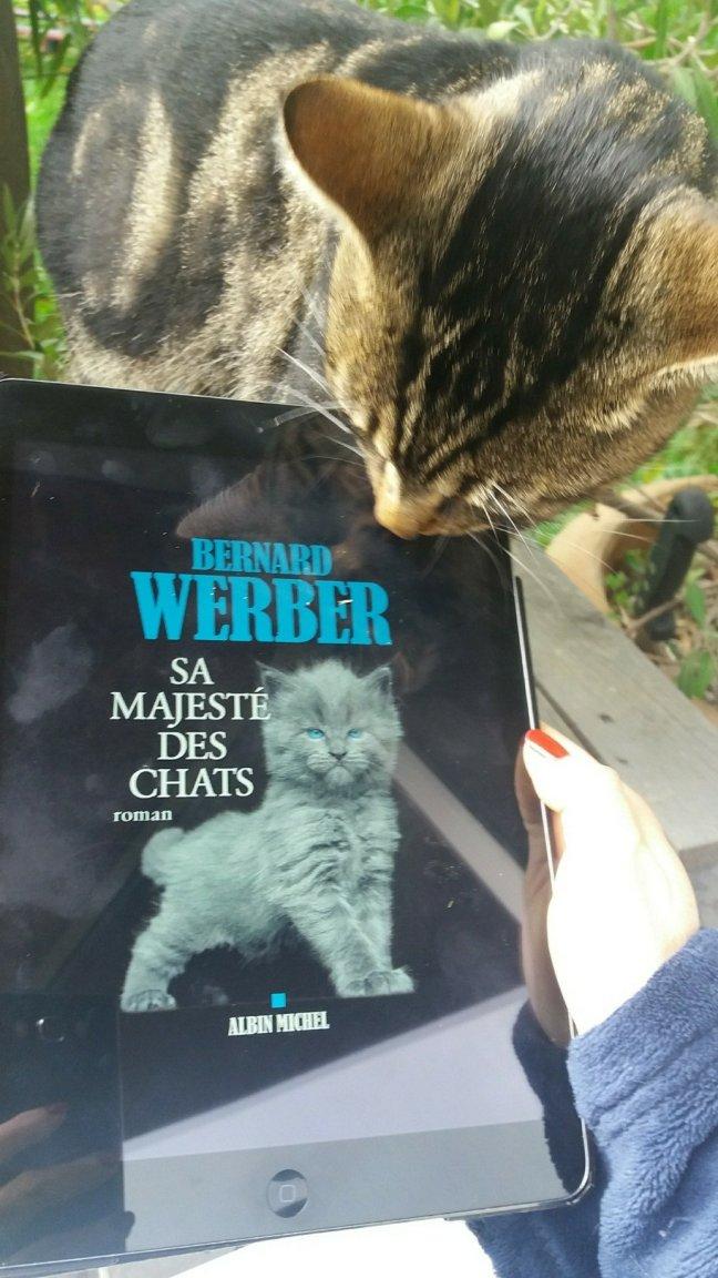 sa majesté des chats1414015442..jpg